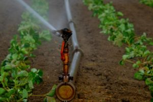 water sprinklers in crops