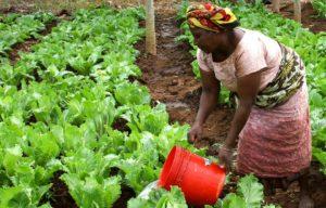 contractualisation agriculture afrique