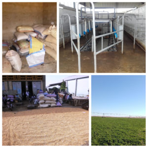 agroalimentaire afrique